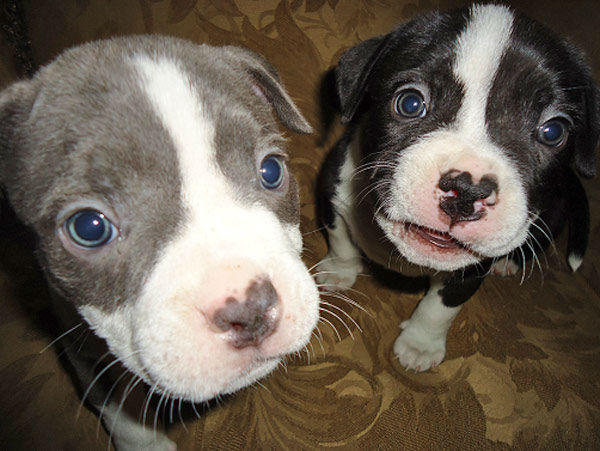 ABC7 viewer Heather Ortiz posted this phot of her puppies Chuck and Cleveland on our Facebook page.