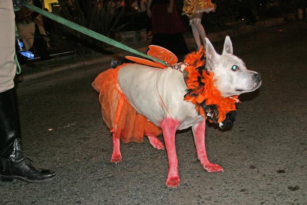 A dog takes part in the West Hollywood Halloween Costume Carnaval in West Hollywood on Wednesday, Oct. 31, 2012. <span class=meta>(ABC7)</span>