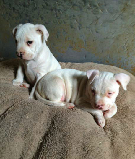 "<div class=""meta ""><span class=""caption-text "">To celebrate National Puppy Day on Friday, March 23, we asked viewers to post pictures of their pooch on our Facebook page. Here's a photo from Rhonda Botchan of her pups Angel and Lucy. (KABC Photo)</span></div>"