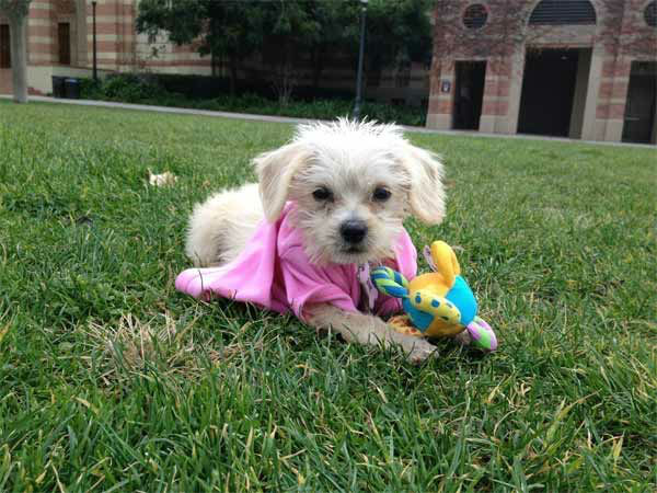 "<div class=""meta ""><span class=""caption-text "">To celebrate National Puppy Day on Friday, March 23, we asked viewers to post pictures of their pooch on our Facebook page. Here's a photo from Annie Kang of her puppy April. (KABC Photo)</span></div>"