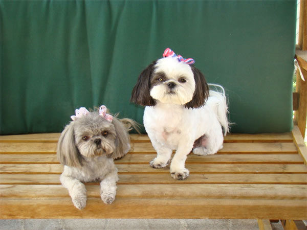 To celebrate National Puppy Day on Friday, March 23, we asked viewers to post pictures of their pooch on our Facebook page. Here&#39;s a photo from Lisa Keys of her puppies Daisey and Daisy. <span class=meta>(KABC Photo)</span>