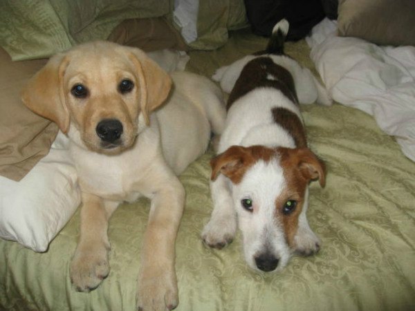 "<div class=""meta ""><span class=""caption-text "">To celebrate National Puppy Day on Friday, March 23, we asked viewers to post pictures of their pooch on our Facebook page. Here's a photo from Nikki Young of her puppies Dakota and Spanky. (KABC)</span></div>"