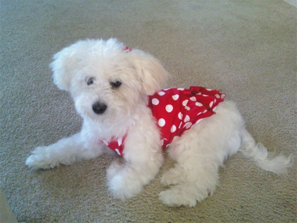 "<div class=""meta ""><span class=""caption-text "">To celebrate National Puppy Day on Friday, March 23, we asked viewers to post pictures of their pooch on our Facebook page. Here's a photo from Annette Romero of her puppy Nuala. (KABC Photo)</span></div>"