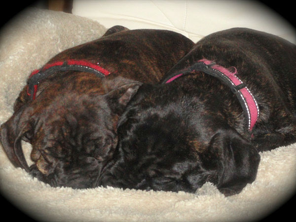 "<div class=""meta ""><span class=""caption-text "">To celebrate National Puppy Day on Friday, March 23, we asked viewers to post pictures of their pooch on our Facebook page. Here's a photo from Becki Friend of her puppies Thelma and Louise. (KABC)</span></div>"