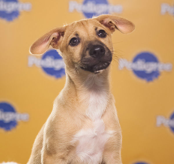 Puppy Bowl IX starter Biscuit is a 12-week-old female P