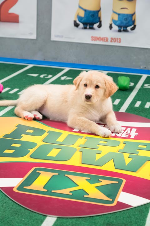 A dog plays on the field during Animal Planet's...