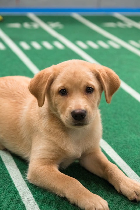 "<div class=""meta image-caption""><div class=""origin-logo origin-image ""><span></span></div><span class=""caption-text"">A dog plays on the field during Animal Planet's Puppy Bowl IX, airing Sunday, Feb. 3, 2013. (Courtesy of Animal Planet)</span></div>"