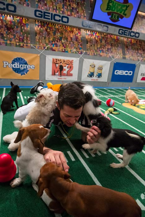 "<div class=""meta ""><span class=""caption-text "">A referee calls nap time during Animal Planet's Puppy Bowl IX, airing Sunday, Feb. 3, 2013. (Courtesy of Animal Planet)</span></div>"