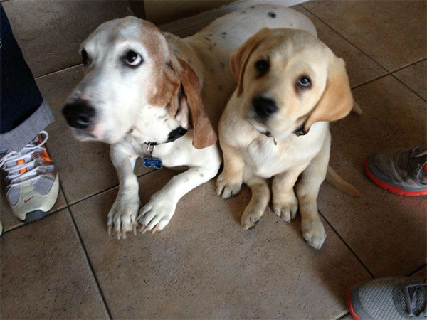 "<div class=""meta ""><span class=""caption-text "">To celebrate National Puppy Day on Saturday, March 23, we asked viewers to post pictures of their pooch on our Facebook page. Here's a photo from Moyra Morachimo-Tanaka of her puppies Petey and Baby Manolo.  (KABC Photo)</span></div>"