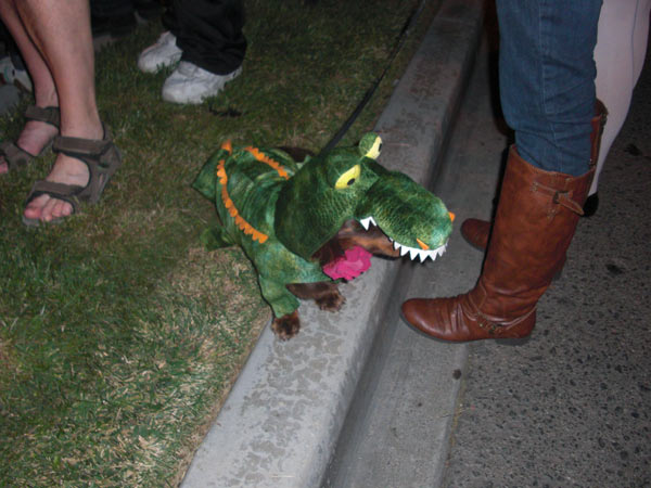 "<div class=""meta ""><span class=""caption-text "">A dog was dressed up as an alligator during the West Hollywood Halloween Costume Carnaval on Thursday, Oct. 31, 2013. (ABC7)</span></div>"