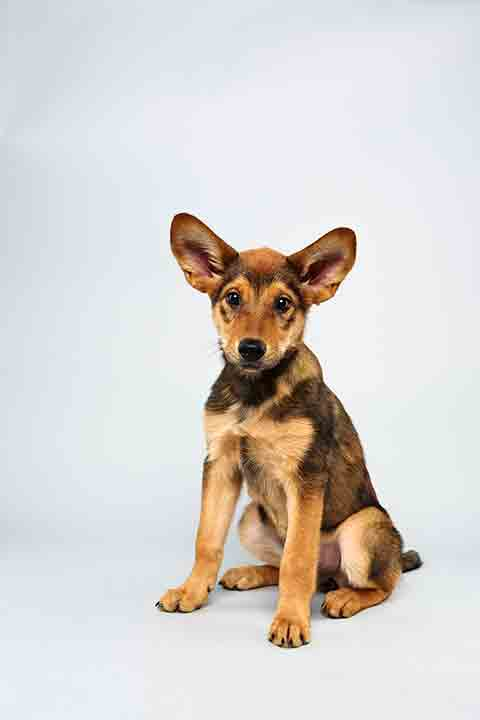 Puppy Bowl X starter Cici is a 13-week-old female German Shepherd Mix who loves to play. The 2014 Puppy Bowl airs Super Bowl Sunday, Feb. 2, on Animal Planet. <span class=meta>(Keith Barraclough&#47;Animal Planet)</span>