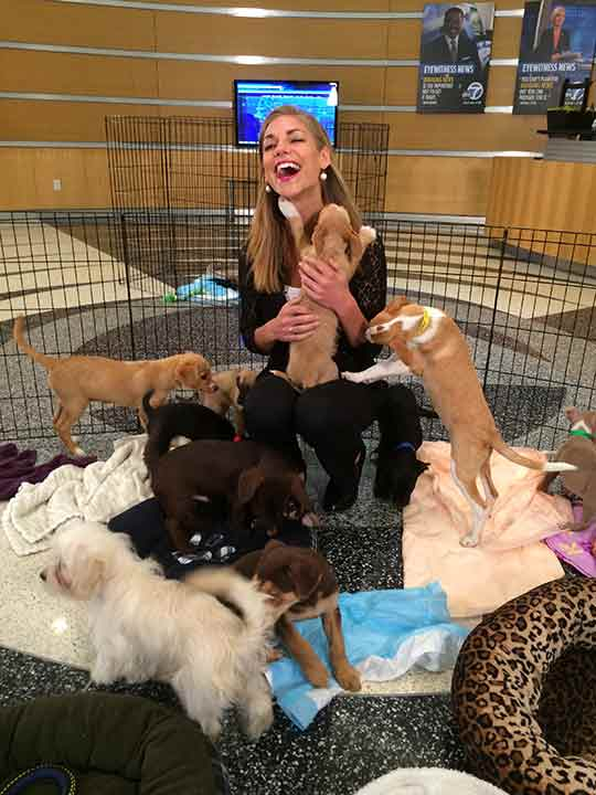 "<div class=""meta image-caption""><div class=""origin-logo origin-image ""><span></span></div><span class=""caption-text"">ABC7 Eyewitness News meteorologist Bri Winkler is surrounded by a crowd of adorable puppies during ABC7's 'Puppypalooza' on Friday, March 21, 2014.</span></div>"