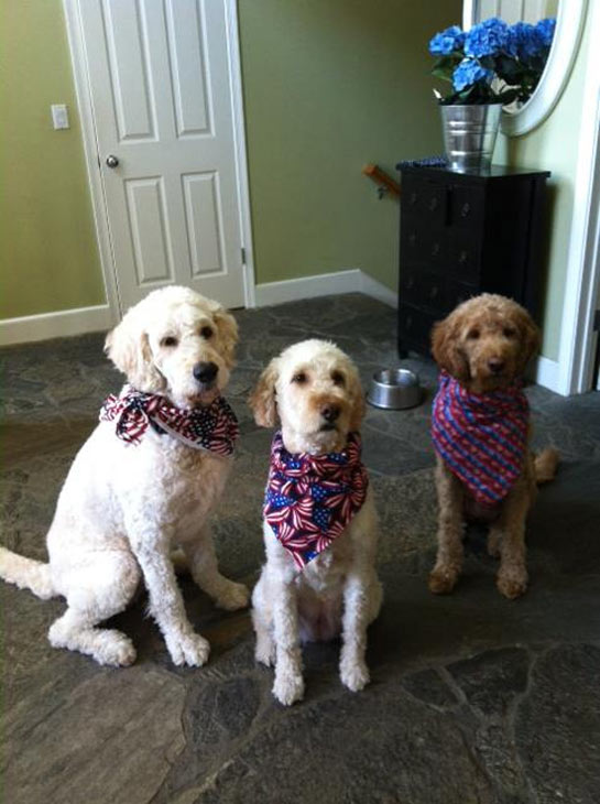 Danielle Eun-Joo Min posted this photo of her puppies Hunter, Boston and Cooper on our Facebook page.