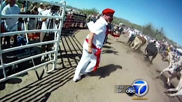 Ariz. has its version of Running of the Bulls