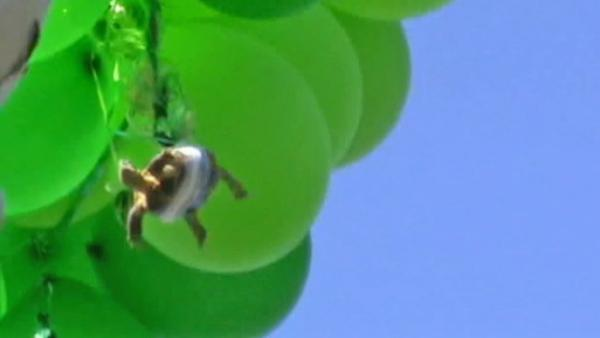 Turtle taped to balloons sent soaring in CA