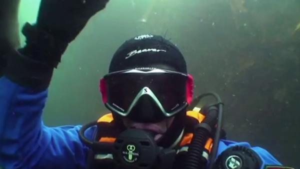 Seal holds diver's hand in YouTube video