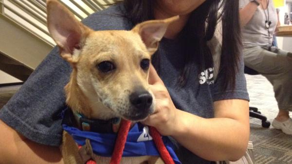 Pet of the Week: 6-month-old Chihuahua mix