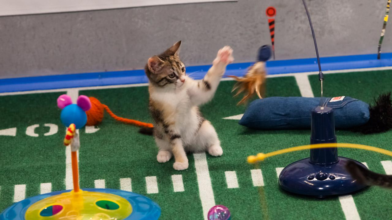 The kitty half time show during Animal Planets Puppy Bowl IX, airing Sunday, Feb. 3, 2013.Animal Planet