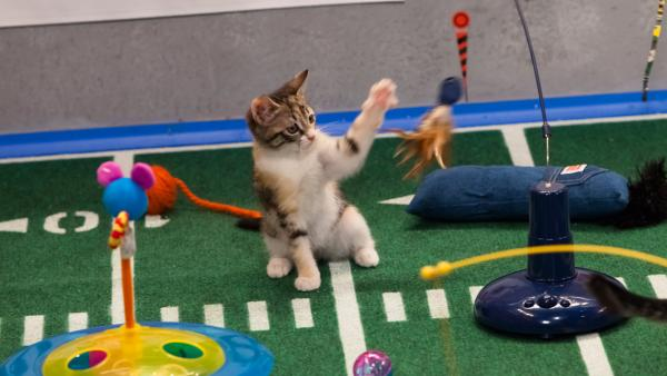 The kitty half time show during Animal Planet's Puppy Bowl IX, airin