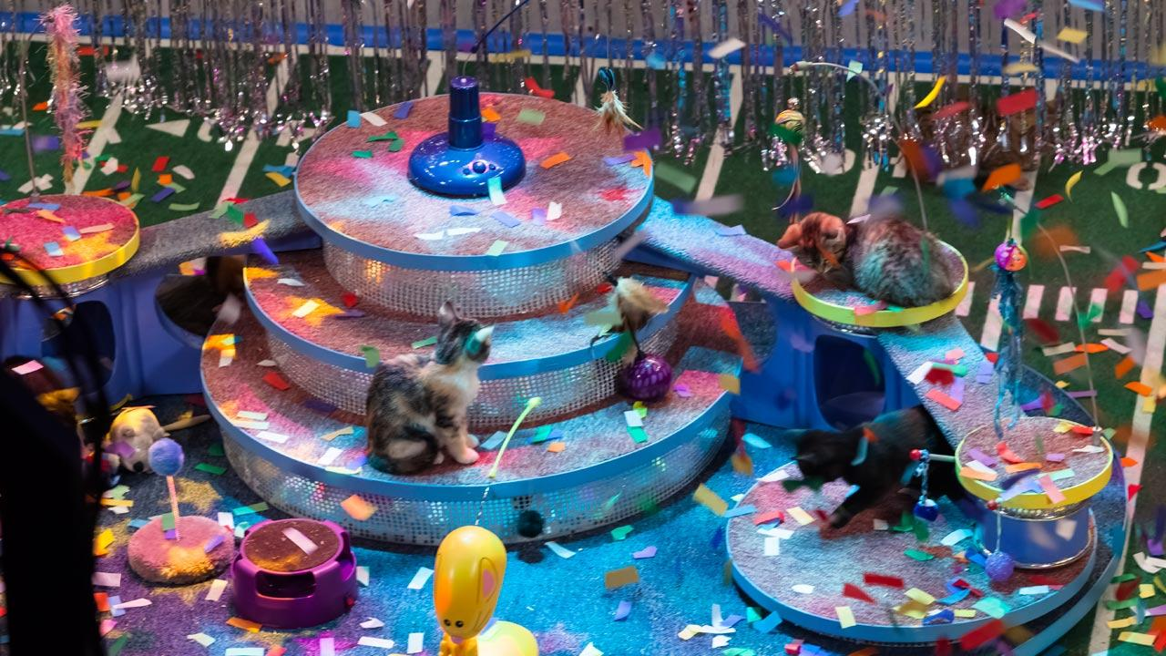 The kitty half time show during Animal Planets Puppy Bowl IX, airing Sunday, Feb. 3, 2013. <span class=meta>(Animal Planet)</span>