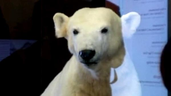 Knut the polar bear becomes museum display