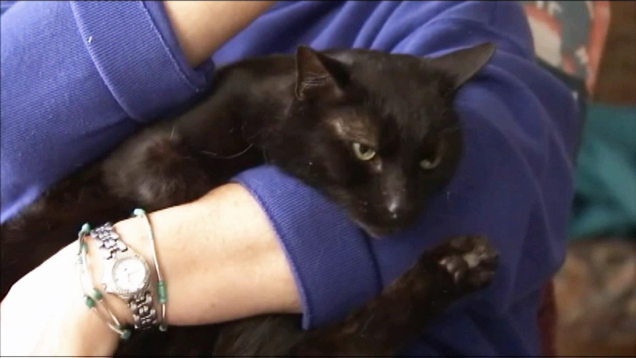 Porsche, a New Jersey cat that got lost after his owners were evacuated during Hurricane Sandy found his way home.
