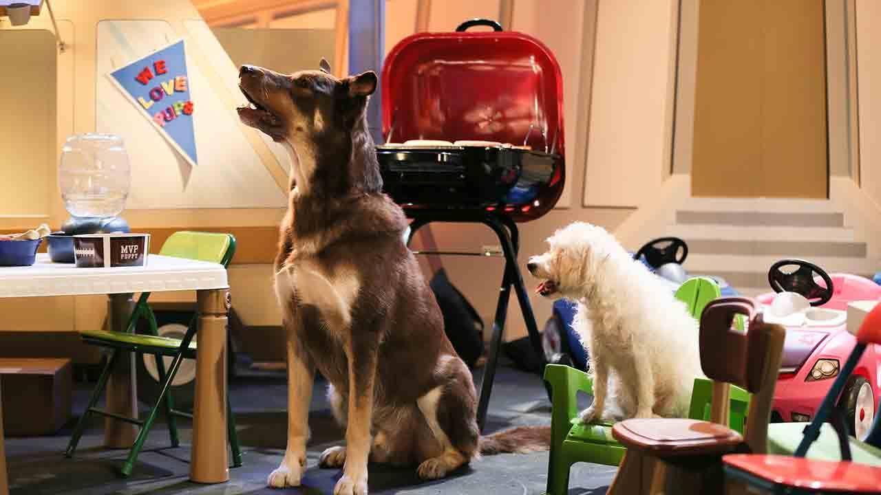 Dogs play on the field during Animal Planets Puppy Bowl X, airing Sunday, Feb. 2, 2014.Damian Strohmeyer/Animal Planet