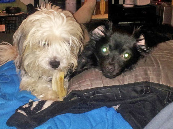 "<div class=""meta ""><span class=""caption-text "">To celebrate National Puppy Day on Saturday, March 23, we asked viewers to post pictures of their pooch on our Facebook page. Here's a photo from Amy Ward of her puppies, Kiwi and Loki. (KABC)</span></div>"