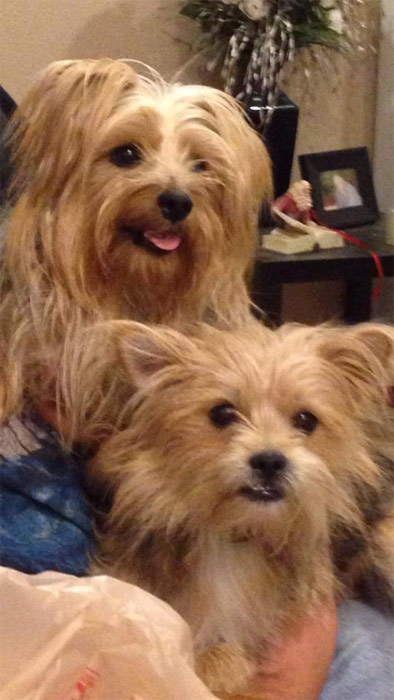 To celebrate National Puppy Day on Saturday, March 23, we asked viewers to post pictures of their pooch on our Facebook page. Here&#39;s a photo from Marisol Venegas-Herretes of her puppies. <span class=meta>(KABC)</span>