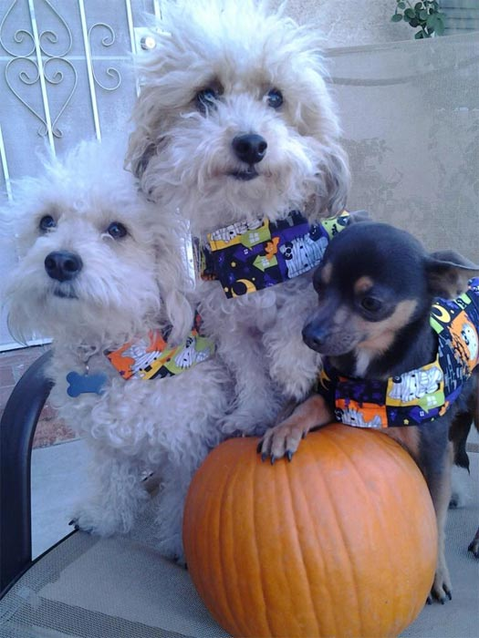 To celebrate National Puppy Day on Saturday, March 23, we asked viewers to post pictures of their pooch on our Facebook page. Here&#39;s a photo from Addy Gomez of her puppies. <span class=meta>(KABC)</span>