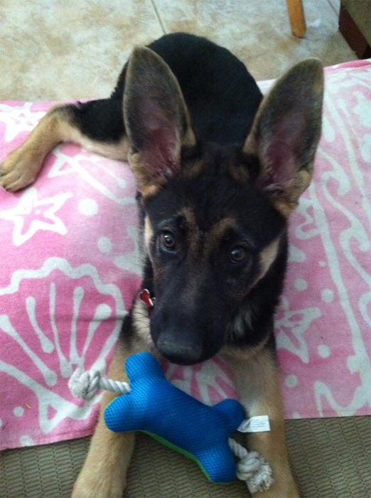 "<div class=""meta ""><span class=""caption-text "">To celebrate National Puppy Day on Saturday, March 23, we asked viewers to post pictures of their pooch on our Facebook page. Here's a photo from Kelly Haggard of her puppy, Ziva. (KABC)</span></div>"