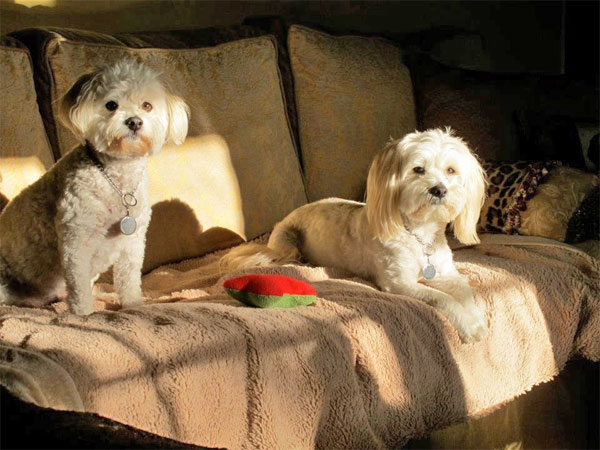 "<div class=""meta ""><span class=""caption-text "">To celebrate National Puppy Day on Saturday, March 23, we asked viewers to post pictures of their pooch on our Facebook page. Here's a photo from Eric van der Werff of his puppies, Cooper and Freeway. (KABC)</span></div>"