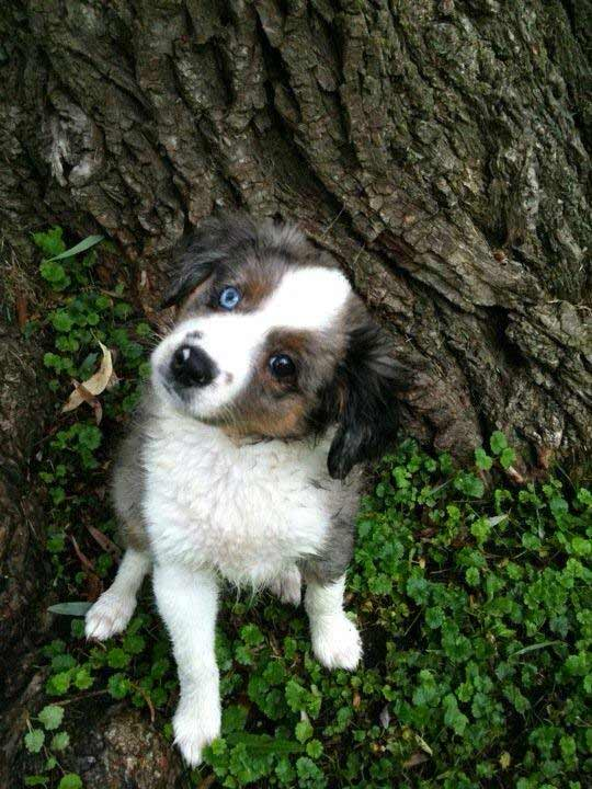 Sharon Thorpe Radford  posted this photo of her puppy Jo Jo on our Facebook page.