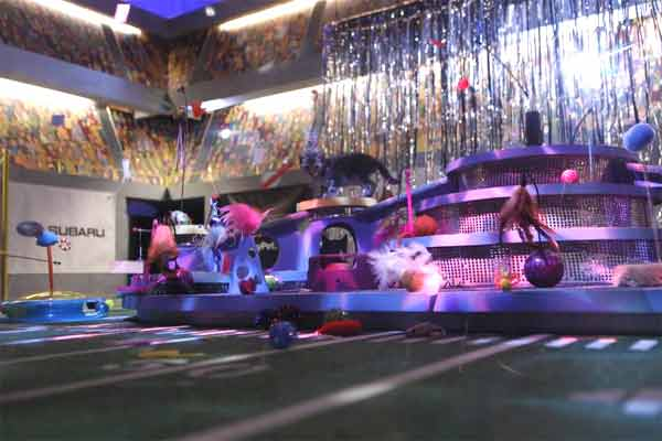 "<div class=""meta image-caption""><div class=""origin-logo origin-image ""><span></span></div><span class=""caption-text"">Animal Planet provided KABC-TV this image of kittens playing during the Kitty Half-Time Show. (Photo courtesy of Animal Planet)</span></div>"