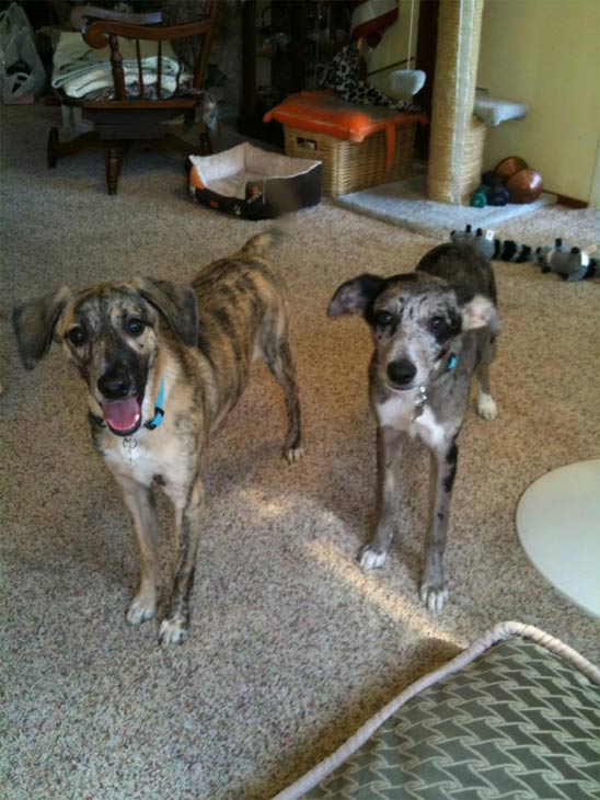 "<div class=""meta ""><span class=""caption-text "">To celebrate National Puppy Day on Saturday, March 23, we asked viewers to post pictures of their pooch on our Facebook page. Here's a photo from Michelle Rehn of her puppies, Lia and Cassie. (KABC)</span></div>"