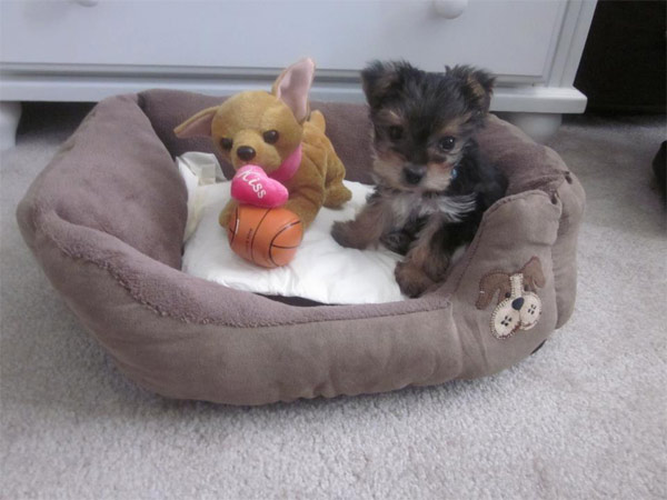 Joey Navarro posted this photo of his puppy Magic on our Facebook page.