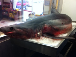"<div class=""meta image-caption""><div class=""origin-logo origin-image ""><span></span></div><span class=""caption-text"">The shark is on display at a seafood business in Freeport, about 55 miles south of Houston. (The shark is on display at a seafood business in Freeport, about 55 miles south of Houston.)</span></div>"