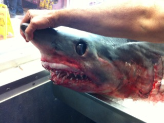 "<div class=""meta ""><span class=""caption-text "">The shark is on display at a seafood business in Freeport, about 55 miles south of Houston.</span></div>"