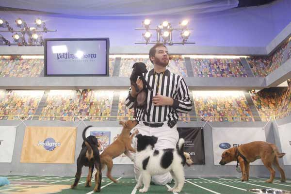 "<div class=""meta image-caption""><div class=""origin-logo origin-image ""><span></span></div><span class=""caption-text"">Animal Planet provided KABC-TV this image of a game referee with multiple puppies. (Photo courtesy of Animal Planet)</span></div>"