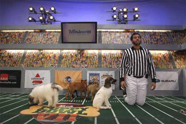 "<div class=""meta ""><span class=""caption-text "">Animal Planet provided KABC-TV this image of a game referee with multiple puppies. (Photo courtesy of Animal Planet)</span></div>"