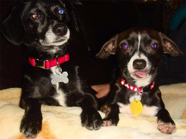 Al Cobian posted this photo of his puppies Ricky and Coco on our Facebook page.