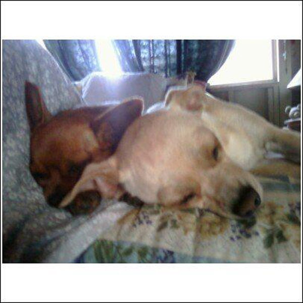 Christine Galvan posted this photo of her puppies Tinkerbell and Snow White on our Facebook page.