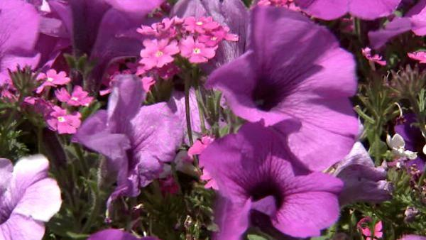 It's springtime, so your flowers should be in bloom and your grass should look its best.  ABC7's Ric Romero offers tips on how to take care of your lawn.