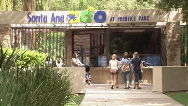 The Santa Ana Zoo houses many unusual animals while still keeping a cozy, small-scale size.