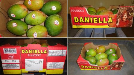 Images of Daniella-brand mangos involved in a recall are shown in these photos provided by the company, Splendid Products.