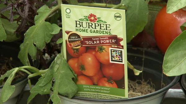 To get more bang out of your gardening buck, you might try new plants by Burpee. Burpee's BOOST vegetables have actually been bred to deliver more antioxidants and vitamins than other nursery plants.
