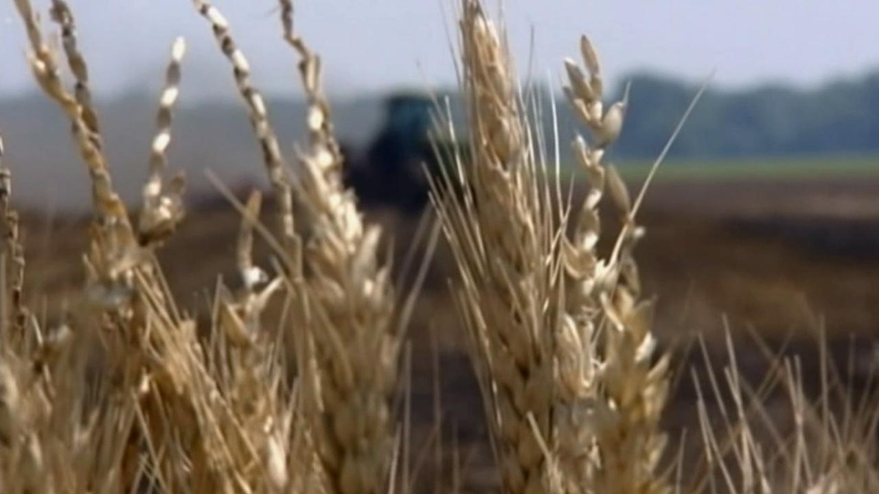 Due to last years weather conditions, were going to see food prices go up, Lempert said. The year 2012 brought the worst drought in 50 years, affecting crop prices.