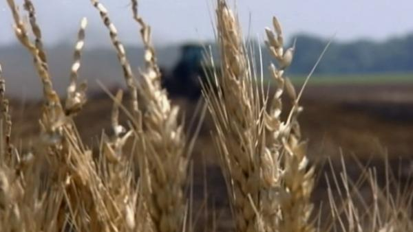 Due to last year's weather conditions, we're going to see food prices go up, Lempert said. The year 2012 brought the worst drought in 50 years, affecting crop prices.
