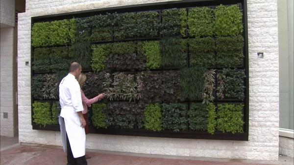 Tips for growing edible wall of herbs at home