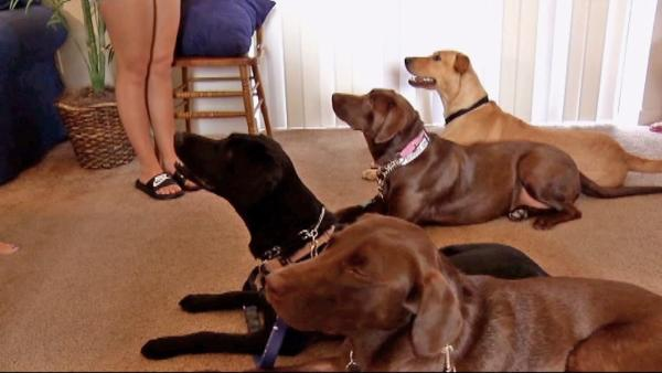 Type 1 diabetes patients helped by trained dogs